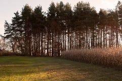 在黄昏的一个冬天农厂场面 库存图片