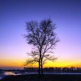 在黄昏的偏僻的树由河在冬天 库存照片