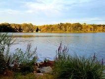 在黄昏的湖边视图与植物 库存图片