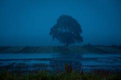 在黄昏的雾结构树 库存照片