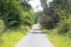 在黄木樨草森林背景最好质量的老路 库存照片