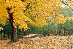 在黄色之下的美丽的槭树野餐桌结构&# 库存图片
