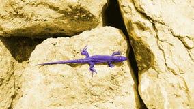 在黄色冰砾的艺术性的紫色蜥蜴 免版税图库摄影