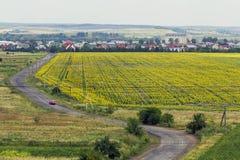 在黄色向日葵领域之间的农村乡下路和小 免版税库存图片