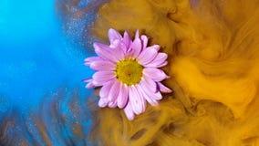 在黄色和蓝墨水慢慢地包裹的浮动浅粉红色的花 股票录像