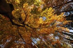 在黄色树下 免版税库存照片