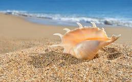 在黄色海滩沙子的贝壳 库存图片