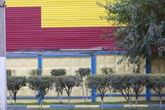 在黄色红色篱芭的背景的金合欢灌木 免版税库存图片