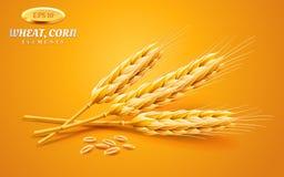 在黄色背景或者大麦隔绝的详细的麦子耳朵、燕麦 自然成份元素 健康食物或 库存照片