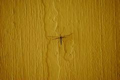 在黄色背景的大蚊或爸爸longlegs 免版税库存照片