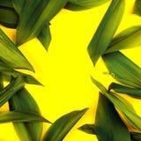 在黄色背景的绿色叶子,平的位置 上面,看法,有魄力的柔和的淡色彩,二重奏口气 免版税库存照片
