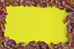 在黄色背景附近的干秋天叶子 库存图片