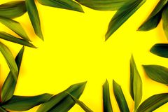 在黄色背景,平的位置,上面的绿色叶子 看法,有魄力的柔和的淡色彩,二重奏口气,框架 免版税库存照片