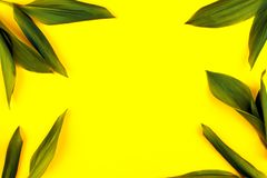 在黄色背景,平的位置,上面,看法,有魄力的柔和的淡色彩,二重奏口气的绿色叶子 免版税库存照片