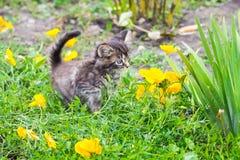 在黄色花中的一只小镶边小猫在花园_ 免版税库存照片