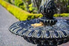 在黄色花的水滴 免版税图库摄影