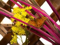 在黄色花的蝴蝶有红色背景 库存照片