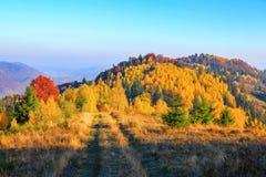 在黄色草的宽路在草甸 库存照片
