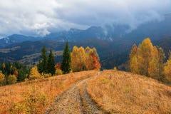 在黄色草的宽路在草甸 图库摄影