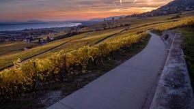 在黄色葡萄园和Geneva湖的惊人日落在欧伯讷,瑞士,在秋季的timelapse 股票录像