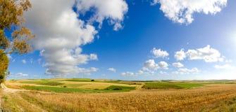 在黄色领域的全景用成熟硬质小麦, grano杜罗 库存照片
