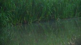 在黎明之前 在森林河附近使水面上,绿草模糊 股票视频