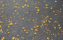在黑新的柏油路下落的黄色花瓣 库存图片