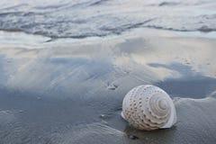 在黑暗含沙的美好的白色壳在热带海滩有拷贝空间背景 免版税库存图片