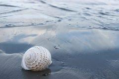 在黑暗含沙的美好的白色壳海滩有拷贝空间背景 图库摄影