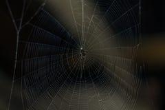 在黑暗的一个蜘蛛网 库存图片