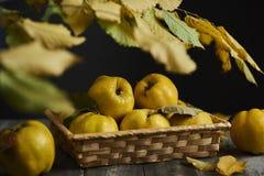 在黑暗的木背景的很多苹果柑橘 顶视图 图库摄影