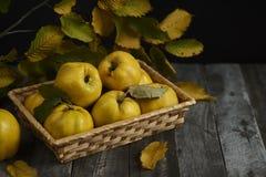 在黑暗的木背景的很多苹果柑橘 顶视图 库存照片