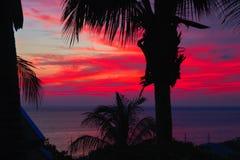 在黑暗的水和剪影棕榈树的剧烈的日落 与云彩的海景在明亮的水多的红色发出光线日落 魔术横向 库存照片