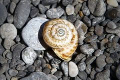 在黑暗的海滩石头-在海滩的黑小卵石石头的美丽的贝壳 自然照片  免版税库存照片