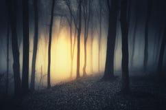 在黑暗的神奇光在晚上困扰了森林 库存照片