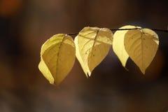在黑暗的背景的五颜六色的秋叶 库存图片