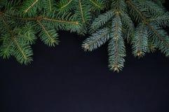 在黑暗的背景的几个圣诞节云杉分支 免版税库存图片