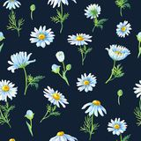 在黑暗的背景的可爱的戴西 与春黄菊的水彩摘要无缝的样式 库存例证