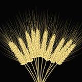 在黑暗的背景的拉长的麦子耳朵 皇族释放例证