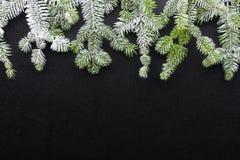 在黑暗的背景的杉树 问候圣诞卡 明信片 christmastime 绿色白色 免版税库存照片