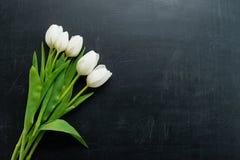 在黑暗的背景的白色郁金香与拷贝空间 免版税图库摄影