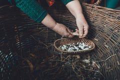 在黑暗的背景的白豆在一个木柳条筐 图库摄影