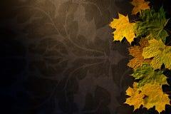 在黑暗的背景的秋叶 免版税库存照片