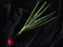 在黑暗的背景的红洋葱和绿色射击 免版税库存图片