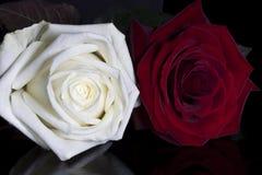 在黑暗的背景的红色和白玫瑰 免版税库存图片