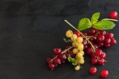 在黑暗的背景的红色和黄色当前莓果 免版税库存图片