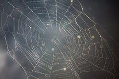 在黑暗的背景的Spiderweb在池塘前面 免版税库存照片