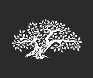 在黑暗的背景隔绝的巨大和神圣的橡树剪影商标徽章 免版税库存图片
