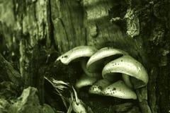 在黑暗的蘑菇 库存图片