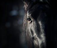 在黑暗的马眼睛 免版税库存照片